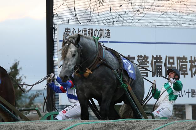 キンツルモリウチ  レース(17/09/24・第38回 青雲賞)