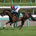 グランシルク レース(17/09/11・ 第62回 京成杯オータムハンデキャップ)