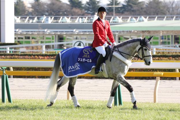 東京競馬場 誘導馬_2(17/01/28)