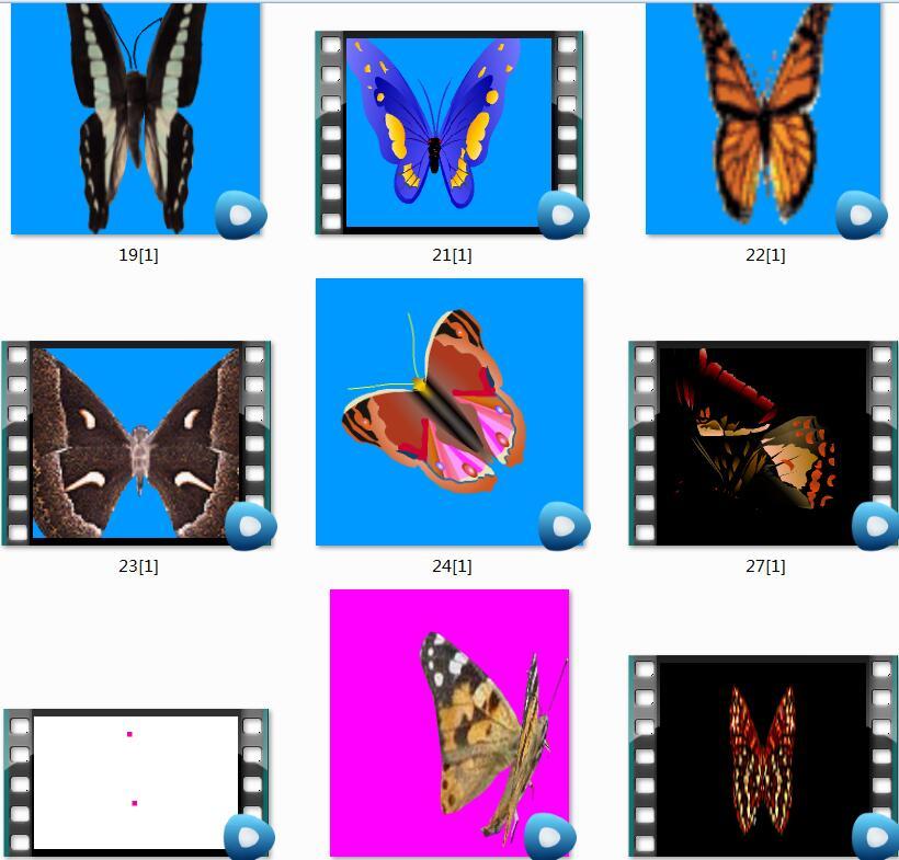 蝴蝶视频素材和序列素材