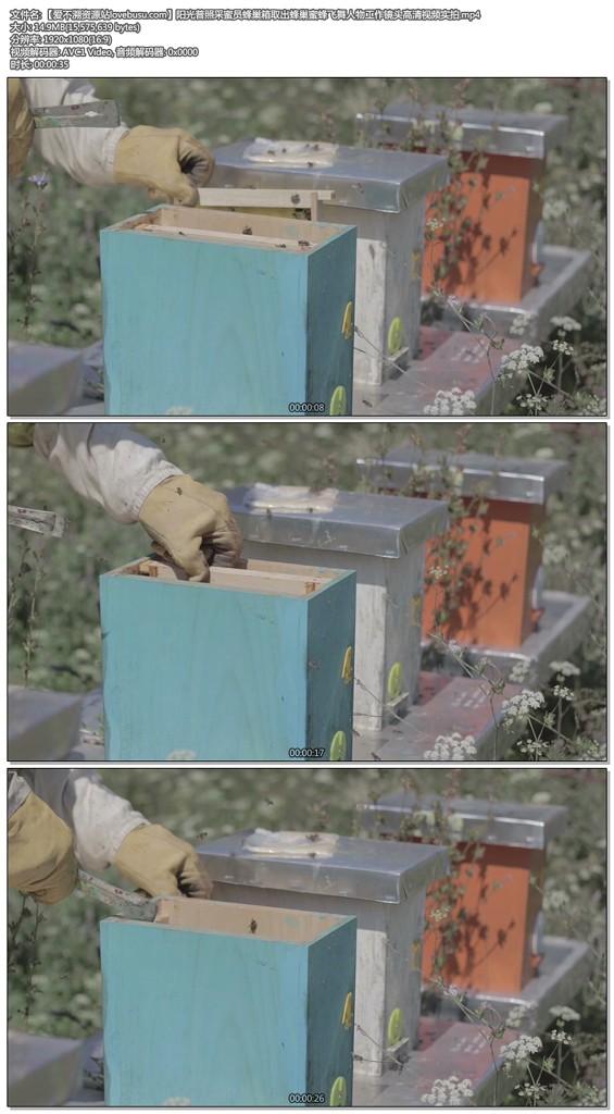 阳光普照采蜜员蜂巢箱取出蜂巢蜜蜂飞舞人物工作镜头高清视频实拍