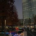 Photos: クリスマスイルミネーション 幕張テクノガーデン