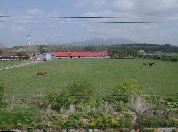 Photos: s7351_車窓_放牧_上段窓から_trim
