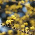 写真: 黄金色の春