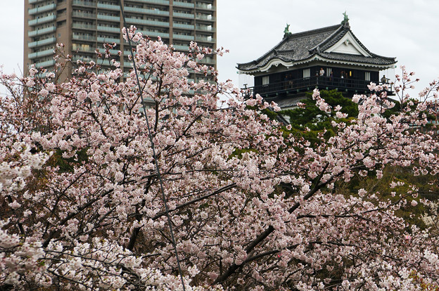 城とビルと桜