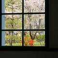 Photos: 春の窓