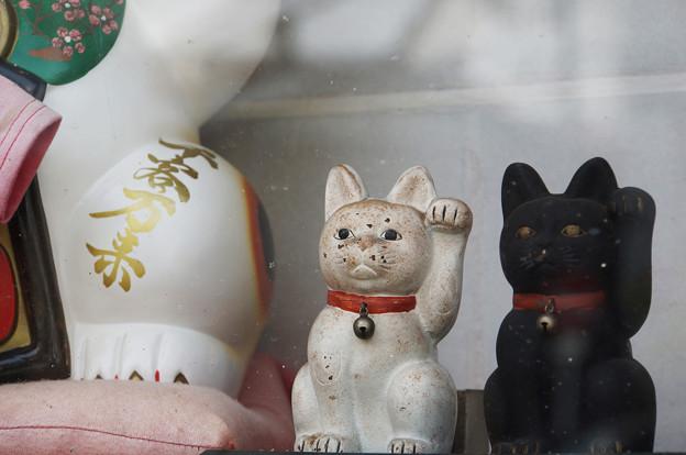 Photos: 白猫黒猫