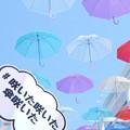 写真: 傘の花咲く