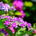 写真: 鮮やかな花模様