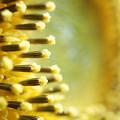 写真: 花粉