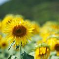 写真: 夏の名残