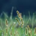 秋草の季節
