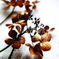 写真: 花は花