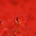赤の中の赤