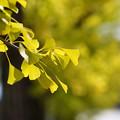 秋色に色づいて