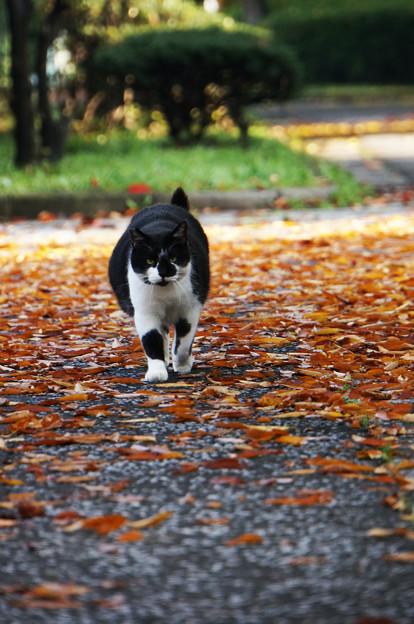 写真: 猫道