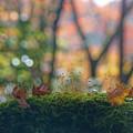 Photos: 苔と落葉