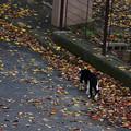 写真: 猫発見!現場に急行します