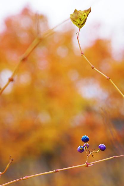 秋のトライアングル