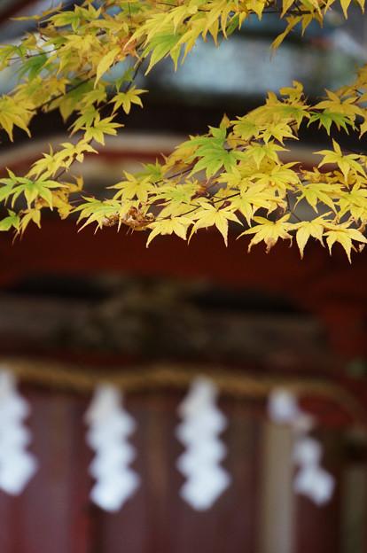 紅葉と紙垂