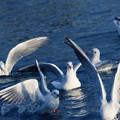 川面の鳥たち