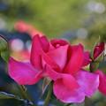 写真: 初夏の色彩