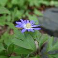 写真: ブルーの春♪♪♪