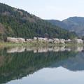 Photos: 余呉湖桜並木
