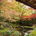写真: 瑠璃の庭