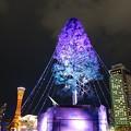 写真: 世界一のクリスマスツリー