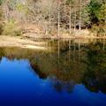 写真: 翡翠が遊ぶ池