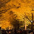 写真: 北大 金葉祭