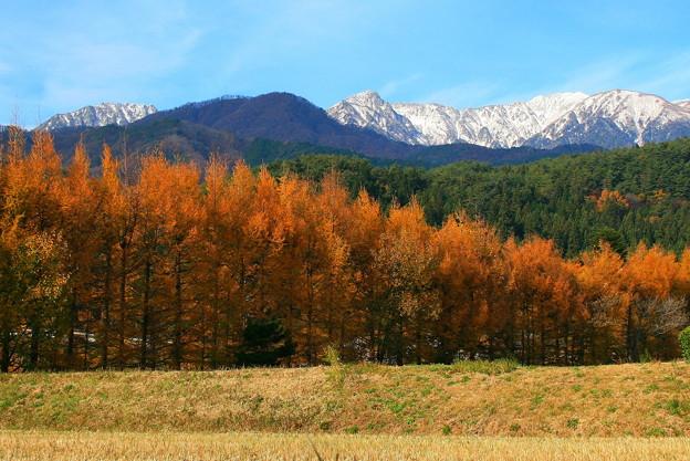 落葉松林と中央アルプス