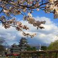 桜と松本城#1