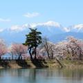 写真: 六道堤の桜と中央アルプスの山並み