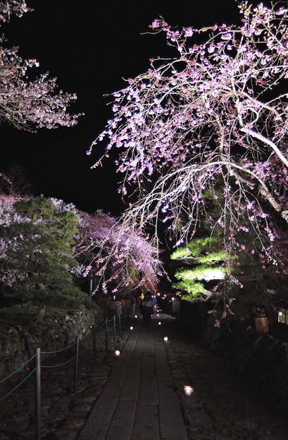 光前寺の枝垂桜#2