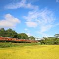写真: しなの鉄道115系(復刻版湘南色)