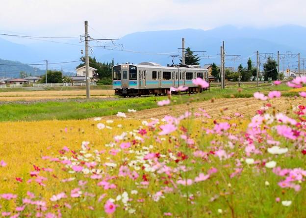 安曇野を行く秋桜列車