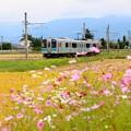 写真: 安曇野を行く秋桜列車