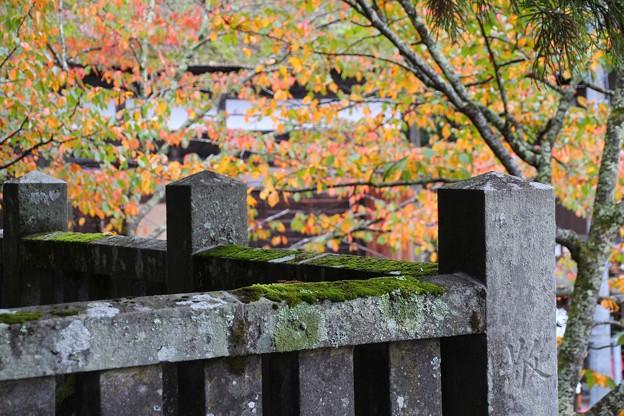 戸隠神社#6