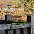 Photos: 戸隠神社#6
