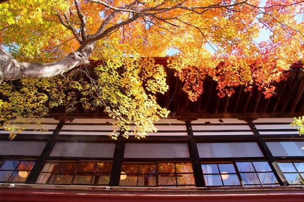 高遠城址公園の紅葉#3