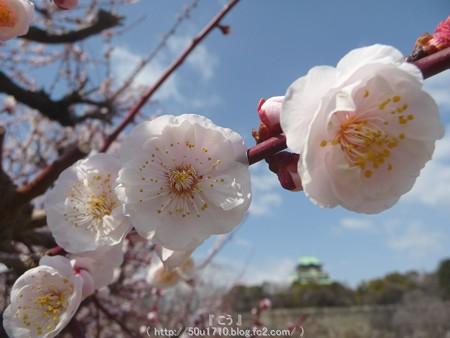 140308-大阪城梅林 (79)