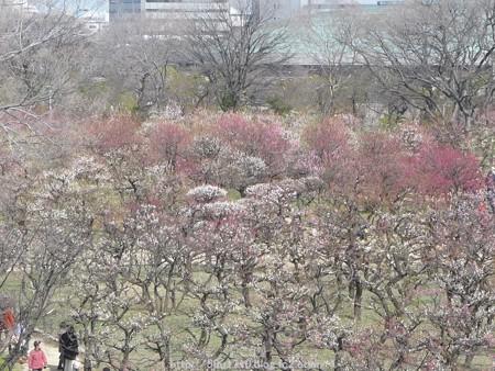 140308-大阪城梅林 (122)