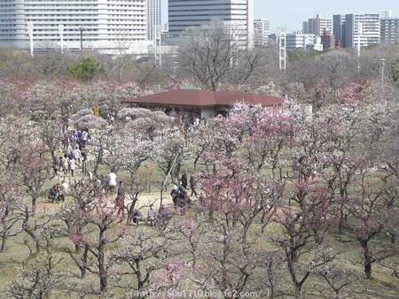 140308-大阪城梅林 (123)