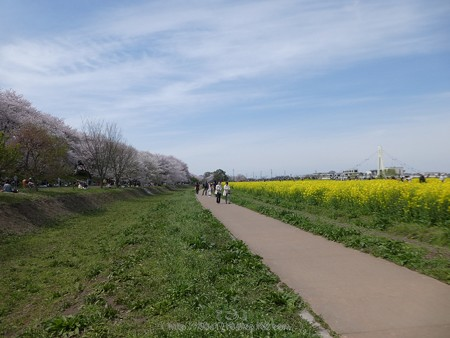 170410-権現堂堤 (85)