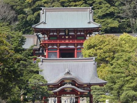 170413-鶴岡八幡宮 (4)