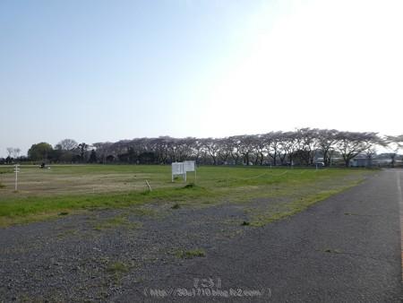170414-上瀬谷原っぱ (34)
