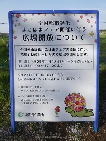 170414-上瀬谷原っぱ (20)