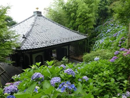 170628-鎌倉 長谷観音 (16)